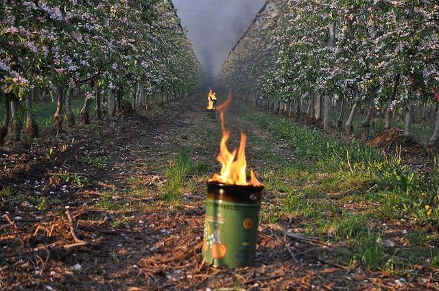 Ovocinári z Veselého zapálili tisíce sviec, snažia sa zachrániť úrodu pred mrazmi