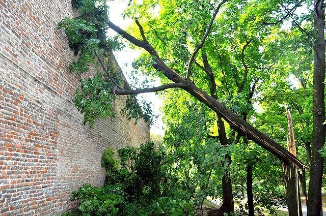 FOTO: Smršť lámala stromy, dva spadli aj na hradby