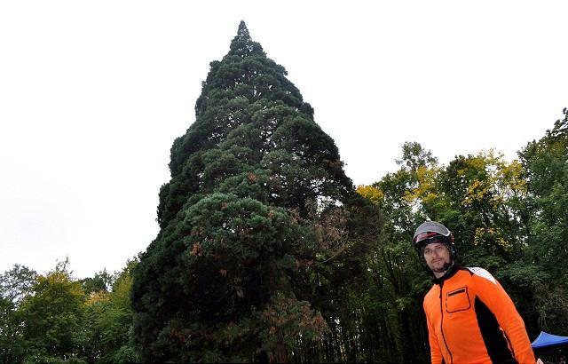 Sekvojovec z Dolnej Krupej skončil v súťaži Strom roka tretí