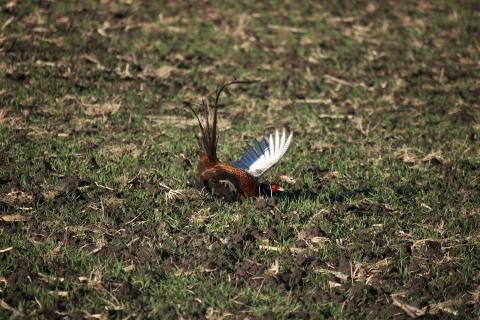 Úrady potvrdili výskyt vtáčej chrípky už aj v Hornej Krupej
