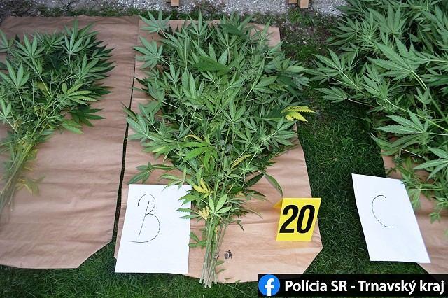Drogová razia v Bučanoch: Polícia pri akcii Cannabis zadržala 30-ročného muža