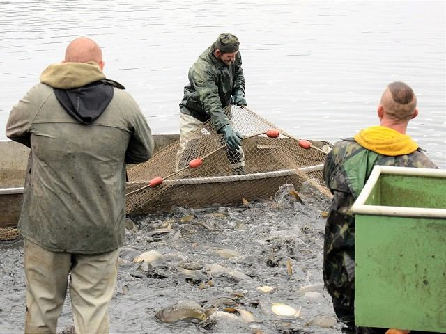 Hľadáte rybu na Vianoce? V Kamenáči ponúkajú živých kaprov z Budmeríc
